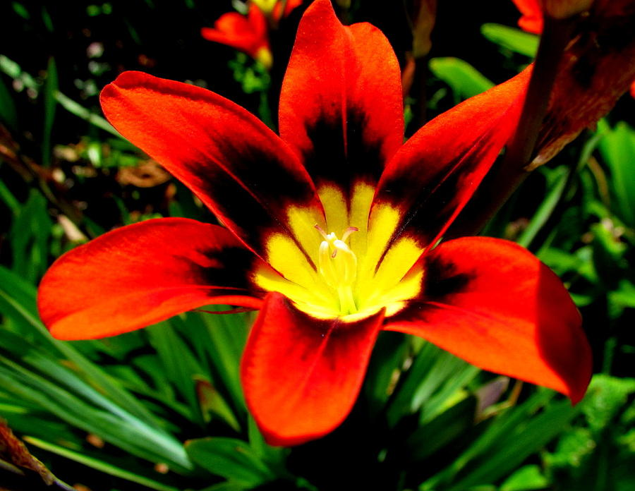 Flower Photograph - Spring Flower by Joyce Woodhouse