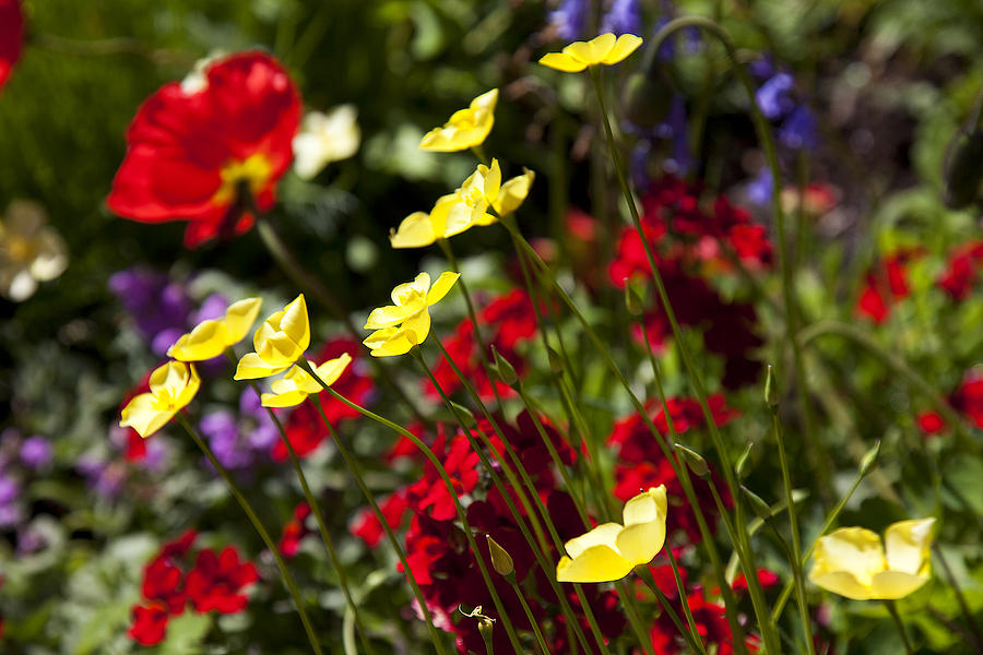 Flower Photograph - Spring Flowers by Garry Gay