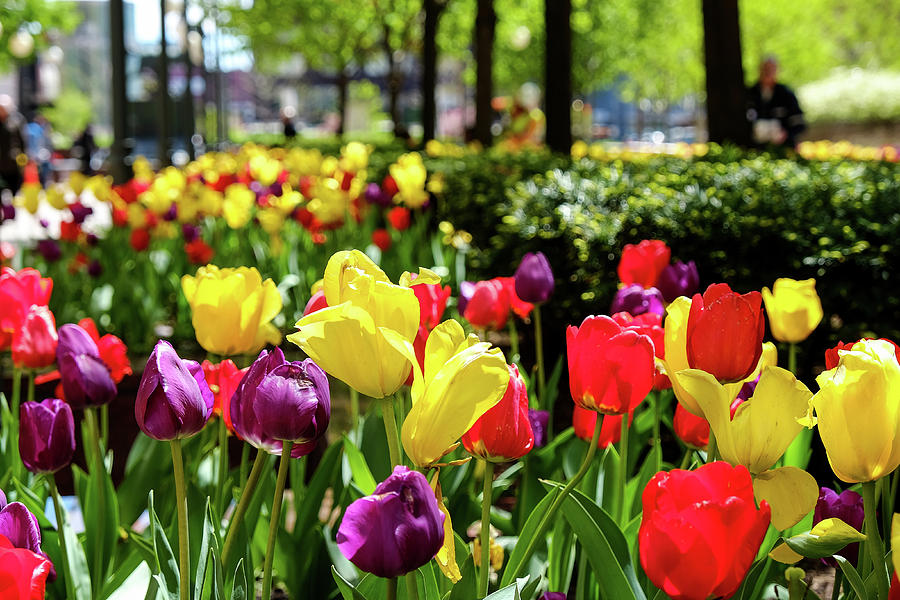 Spring Flowers by John McArthur