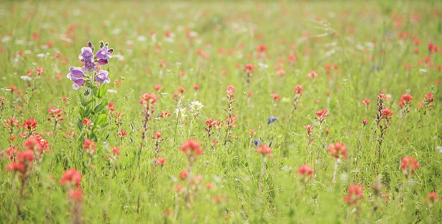 Spring Flowers by Kanokwalee Pusitanun