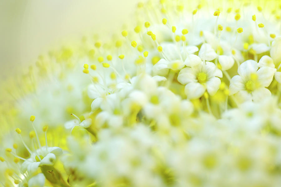 Tree Photograph - Spring Flowers by Nailia Schwarz