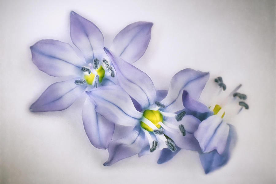 Spring Flowers On White Photograph