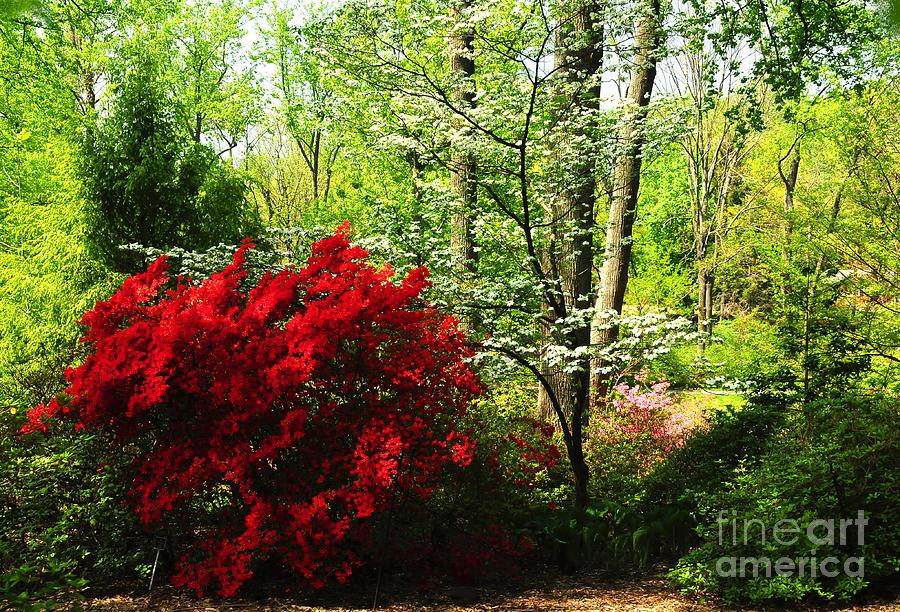 Nature Photograph - Spring Garden by Olivia Hardwicke