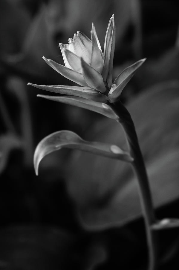 Spring Glow by Glenn DiPaola