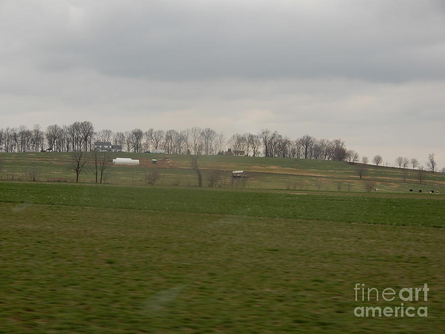 Amish Photograph - Spring Green Farmland by Christine Clark
