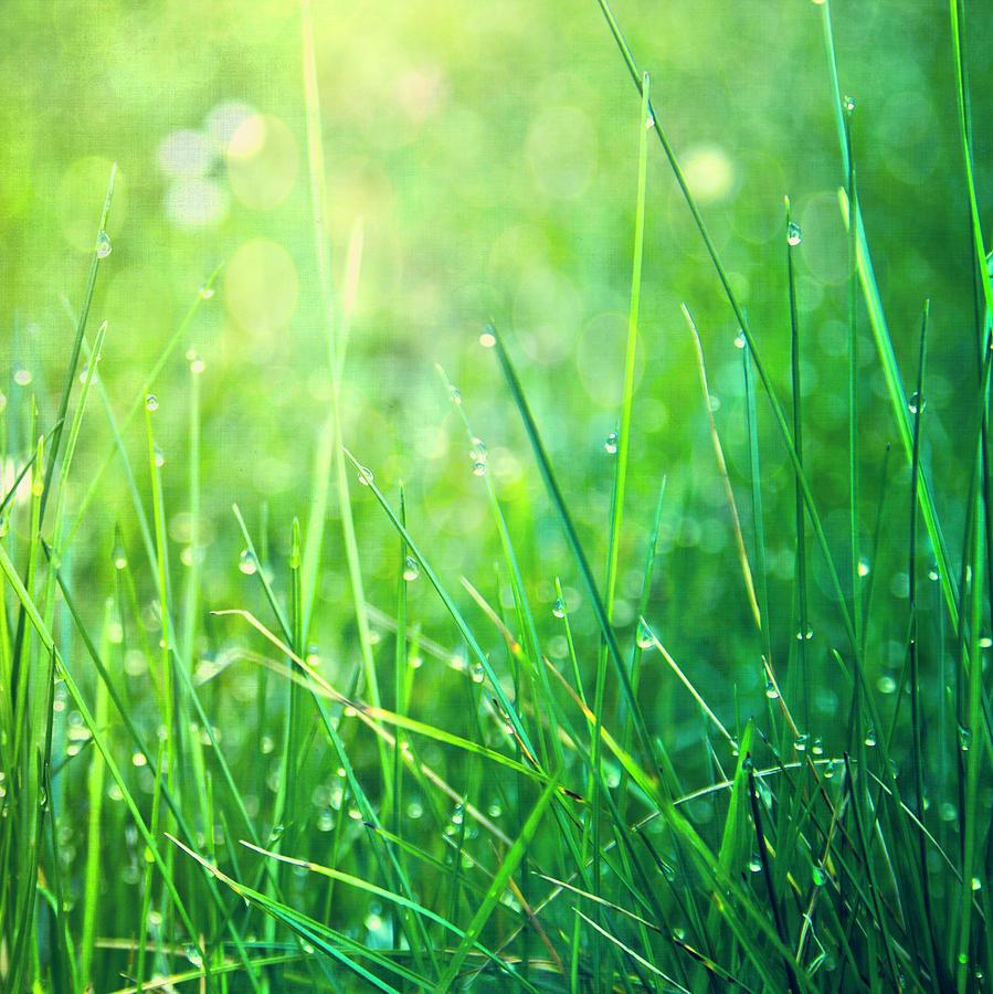 Square Photograph - Spring Green Grass by Dirk Wüstenhagen Imagery