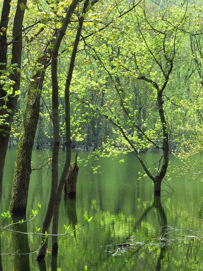 Trees Photograph - Spring Green  by Lori Frisch