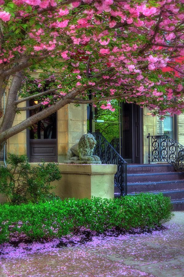 Back Bay Photograph - Spring In Boston - Back Bay Fens by Joann Vitali