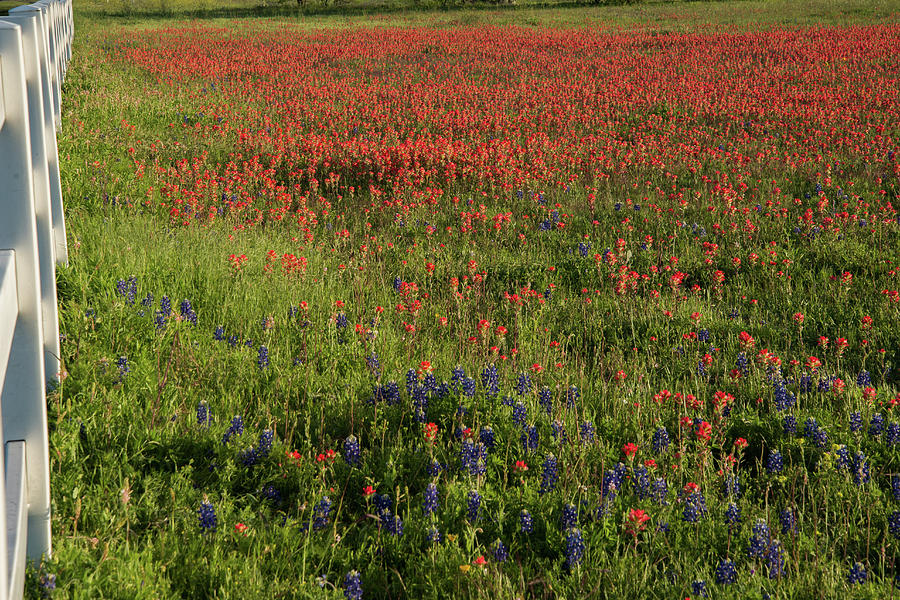 Flowers Photograph - Spring in Central Texas by Frank Madia