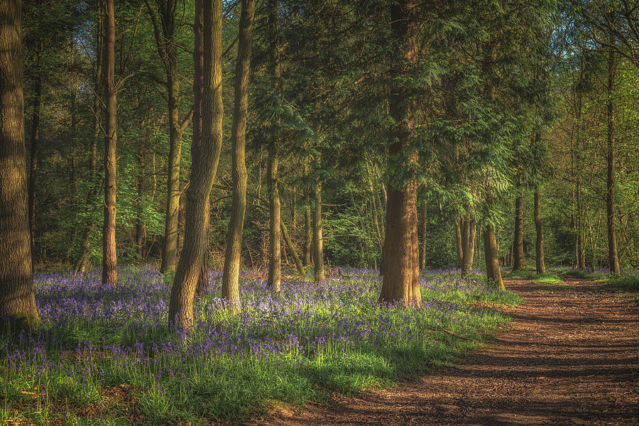 Bluebells Photograph - Spring In Haywood No 2 by Chris Fletcher