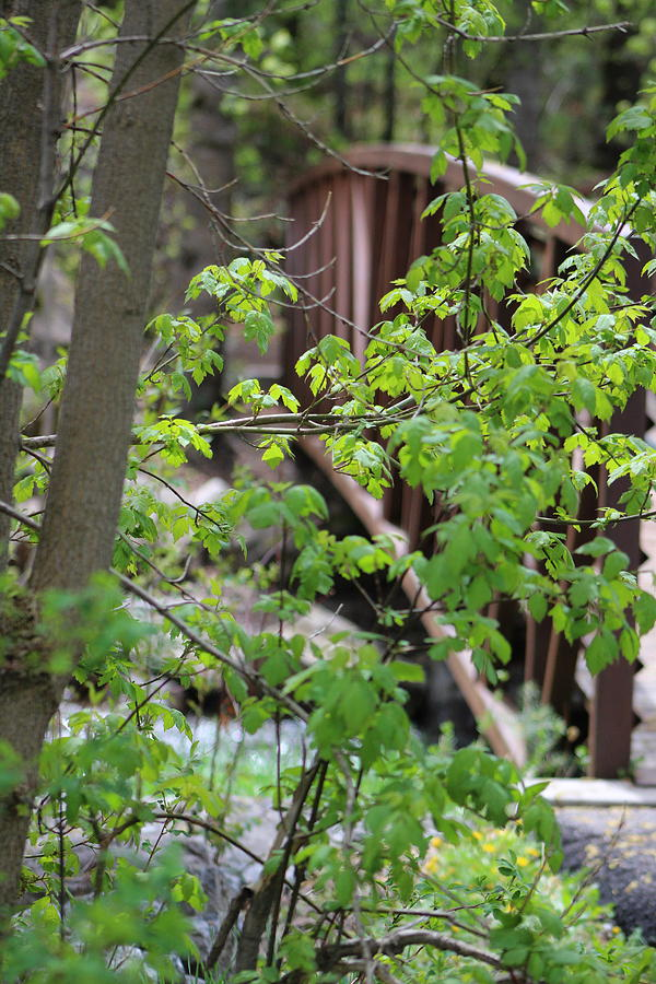 Lime Green Photograph - Spring In The Mountains At American Fork Canyon Utah by Colleen Cornelius