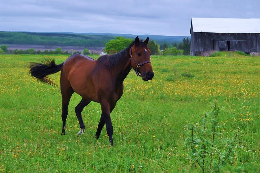 Horse Mixed Media - Spring In The Pasture by Bill Willemsen