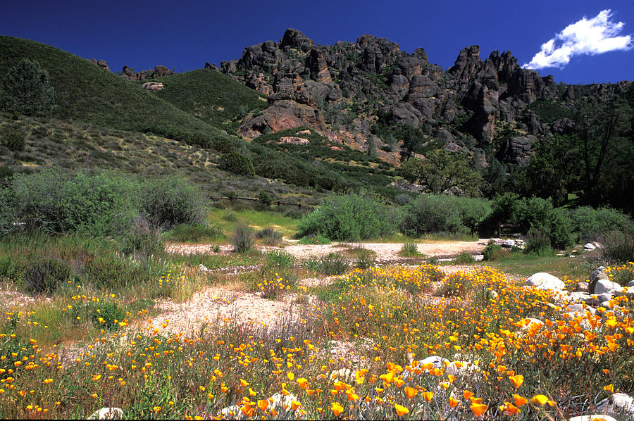 Mountain Landscapes Photograph - Spring In The Pinnacles by Kathy Yates