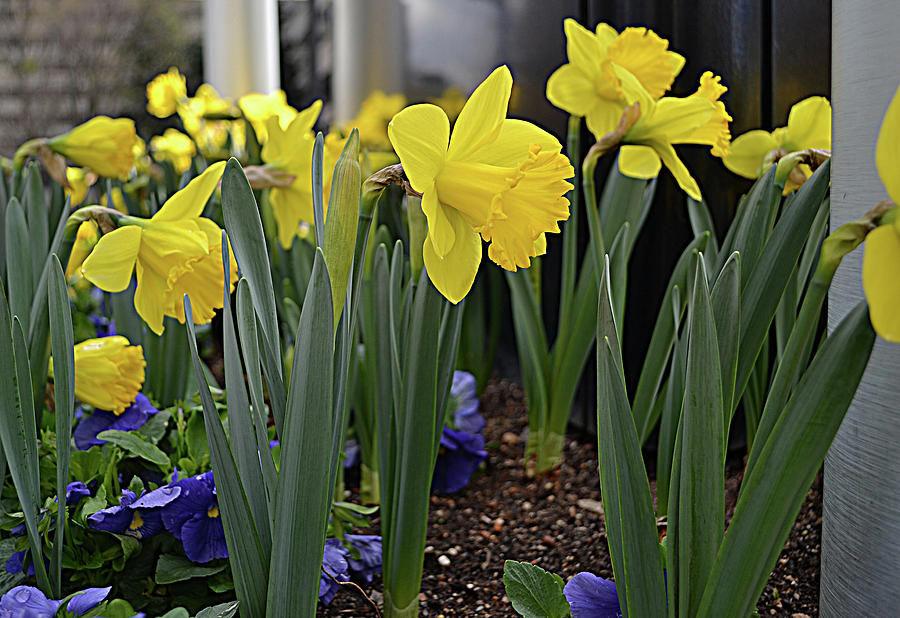 Yellow Color Photograph - Spring In Yellow by Larry Bishop