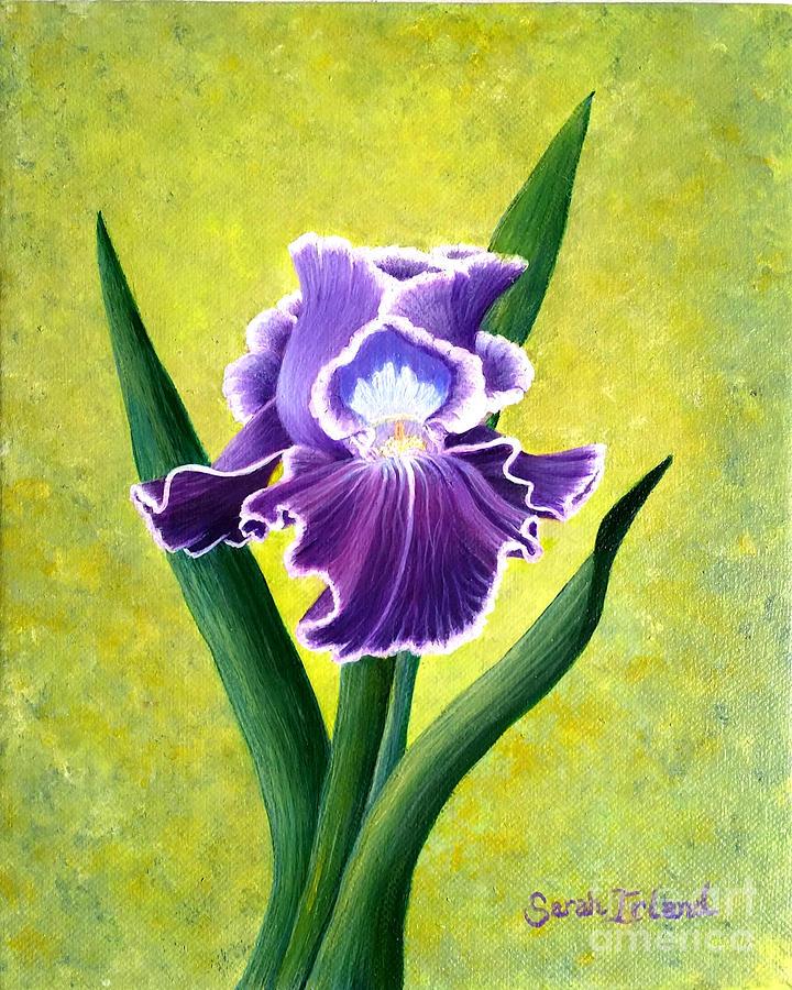 Spring Irls by Sarah Irland