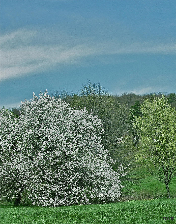 Spring Is Here Photograph - Spring Is Here by Debra     Vatalaro
