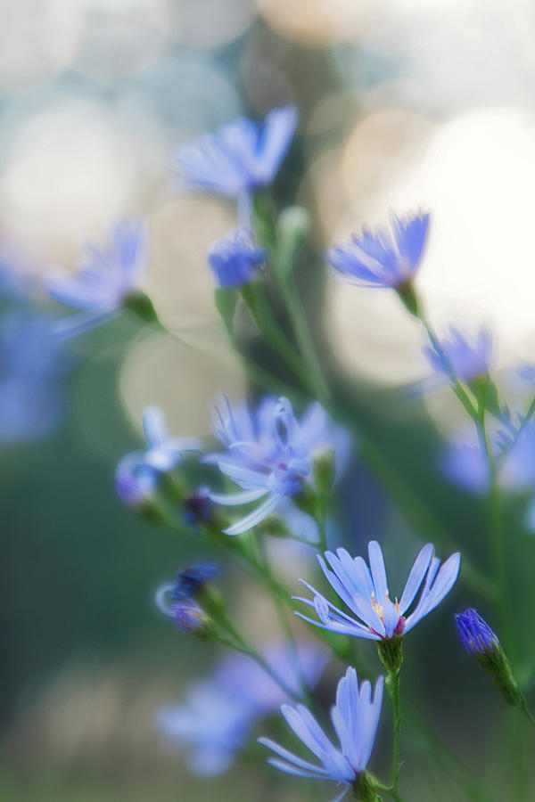 Purple Flowers Photograph - Spring by Kate Livingston