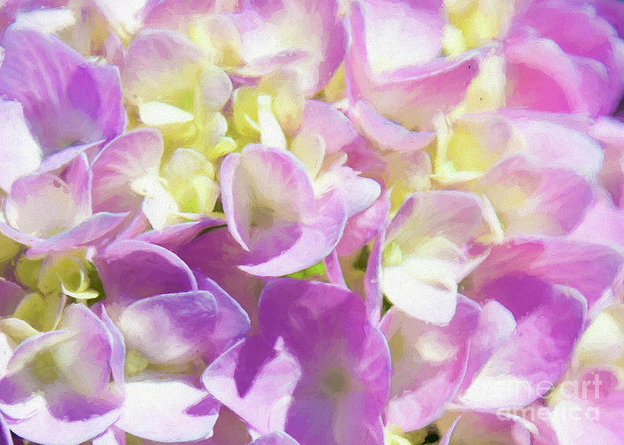 Spring Lavender Hydrangea Painterly 1 by Andee Design