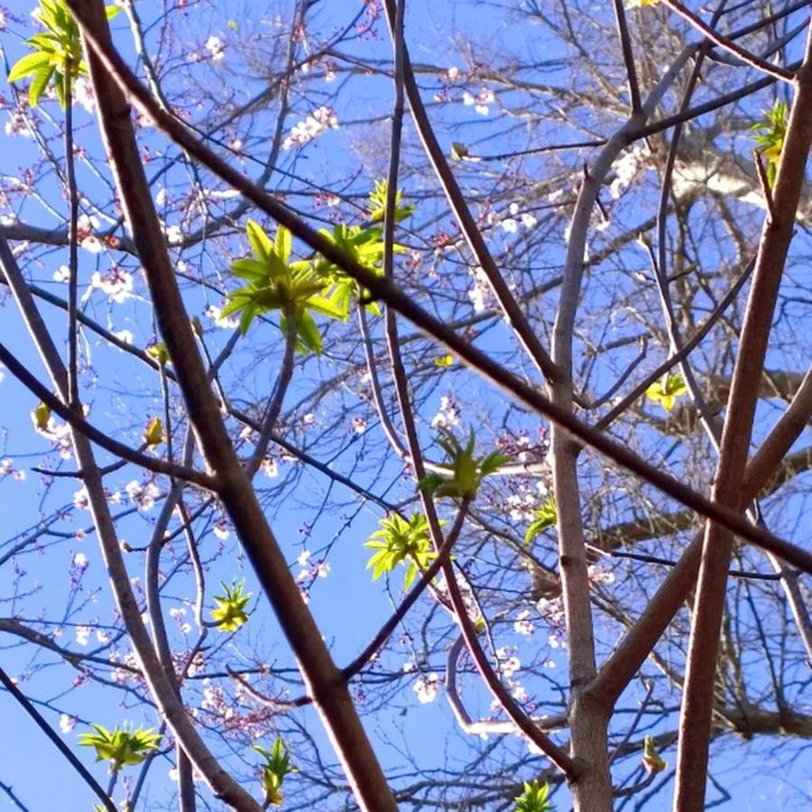 Seasons Photograph - Spring Leaves #seasons #trees by Shari Warren