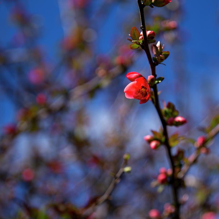 Spring by Lora Lee Chapman