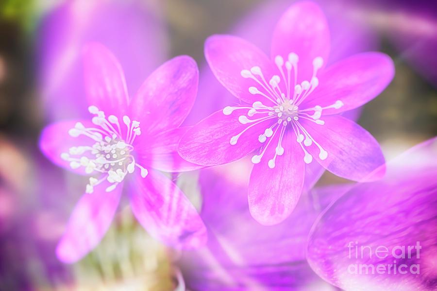 Spring Magic 3 Photograph