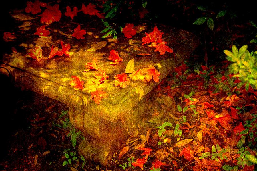 Flower Photograph - Spring Or Autumn by Susanne Van Hulst