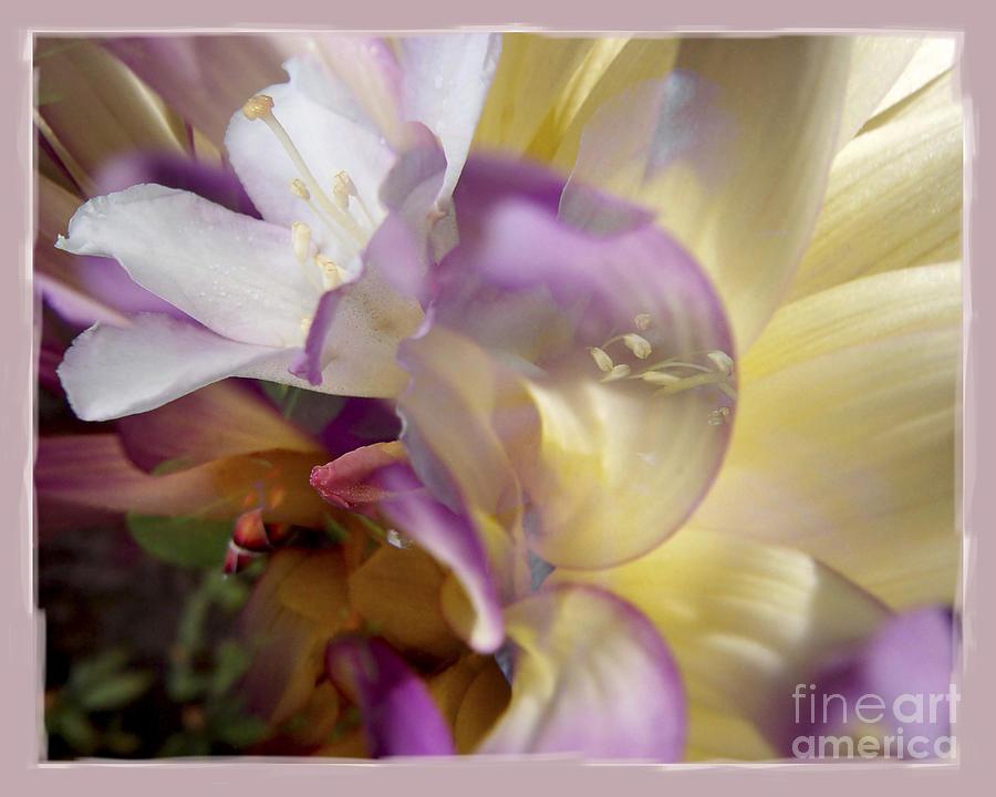 Flower Digital Art - Spring Overture by Chuck Brittenham