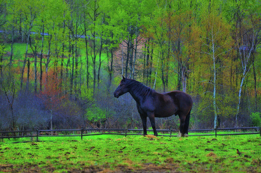 Horse Photograph - Spring Pasture by JAMART Photography