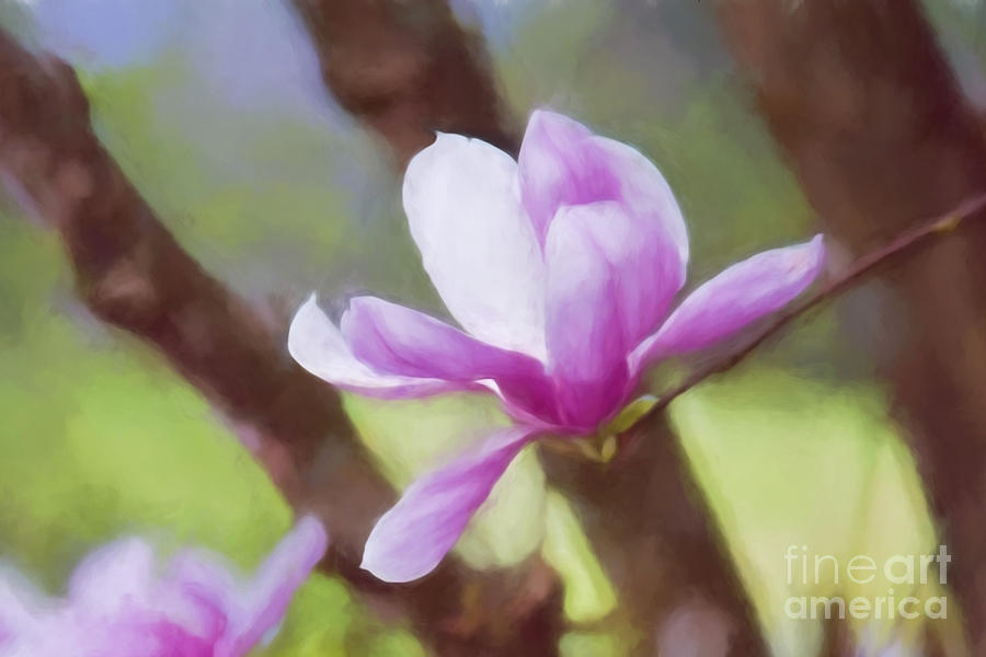 Spring Pink Saucer Magnolia by Patricia Montgomery