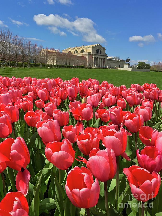 Spring Pink Tulips on Art Hill portrait by Debbie Fenelon