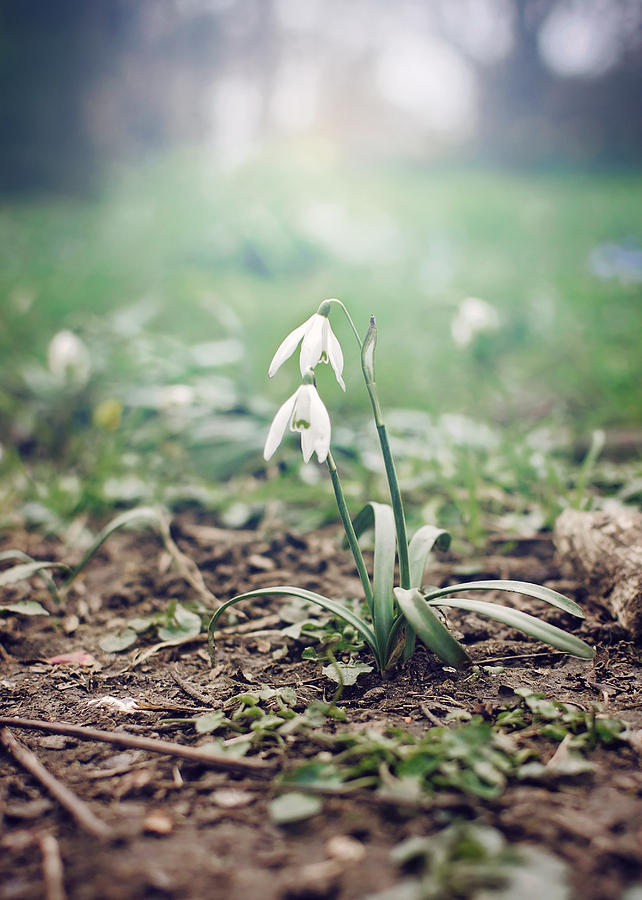 Spring Photograph - Spring Rising by Heather Applegate