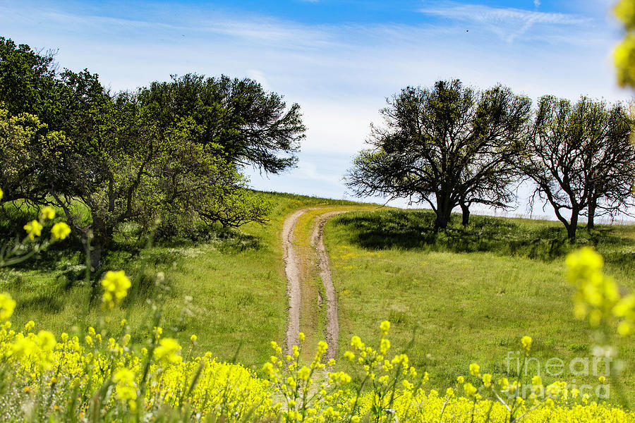 Yellow Flowers Photograph - Spring Road by Caroline Jeanine