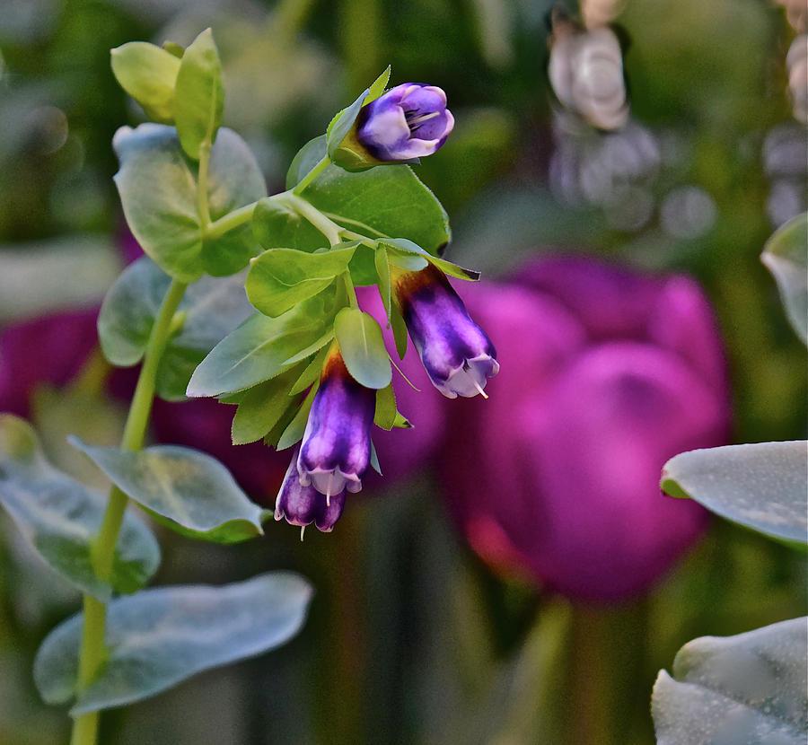 Spring Show 18 Violet Bells by Janis Nussbaum Senungetuk
