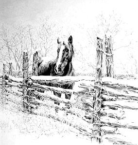 Horse Drawing - Spring Snow by Barbara Widmann