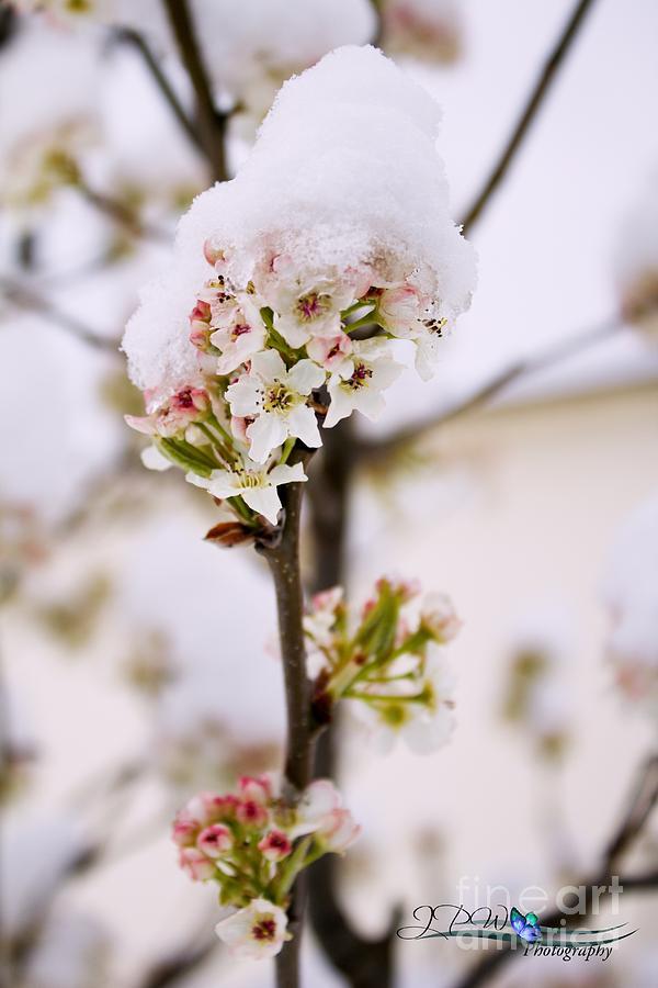Spring Snow Photograph