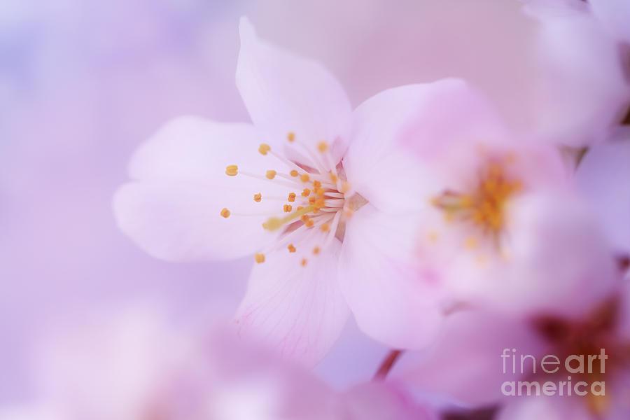 Spring Softness Photograph