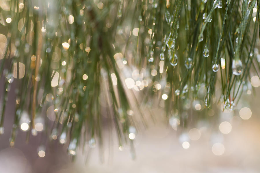Spring Photograph - Spring Sparkle by Sue OConnor
