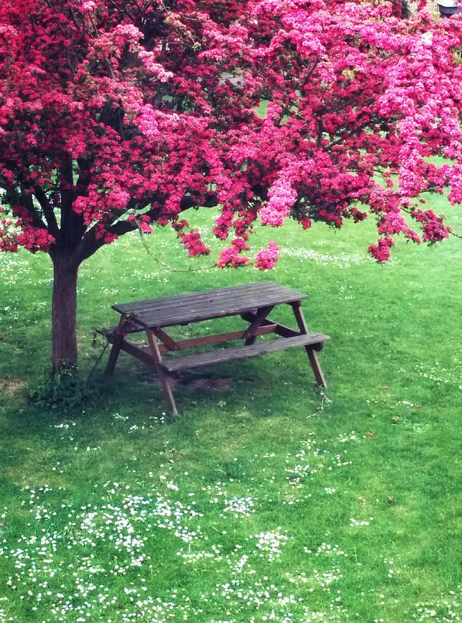 Spring Spot by Renata Vincoletto