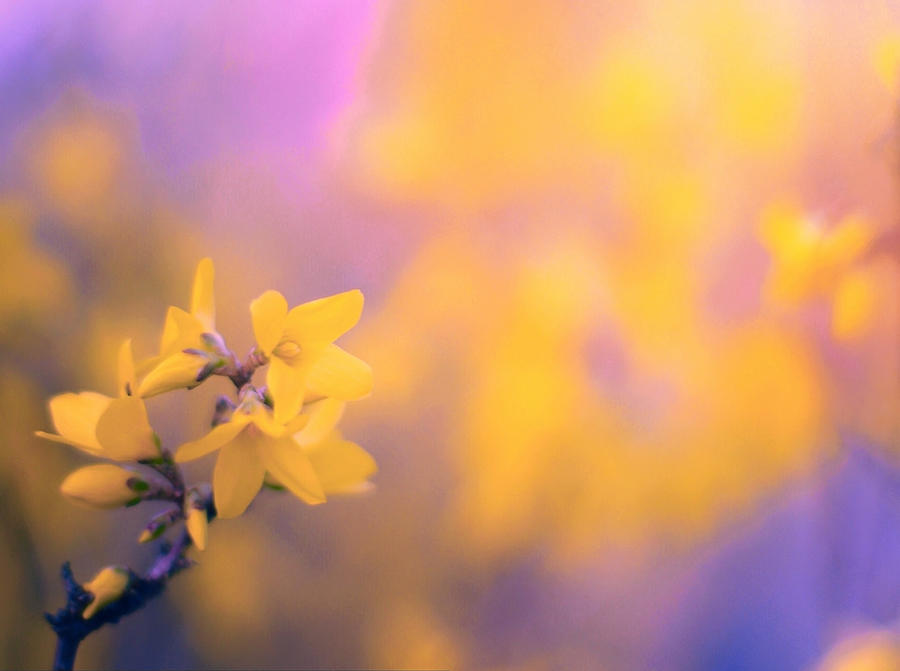 Nature Photograph - Spring Sproing by Susan Maxwell Schmidt