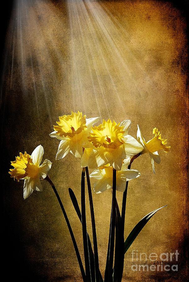 Daffodils Photograph - Spring Sun by Lois Bryan