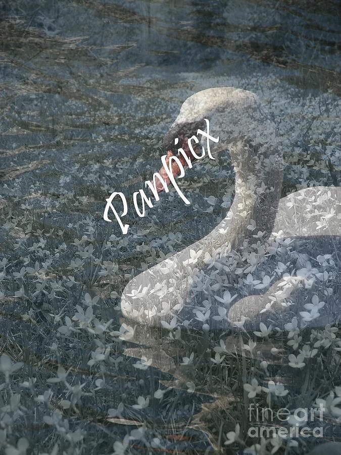 Swan Photograph - Spring Swan by Priscilla Richardson