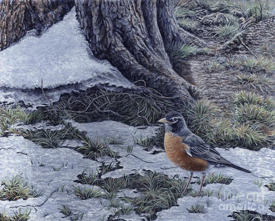 Robin Painting - Spring Thaw - American Robin by Craig Carlson