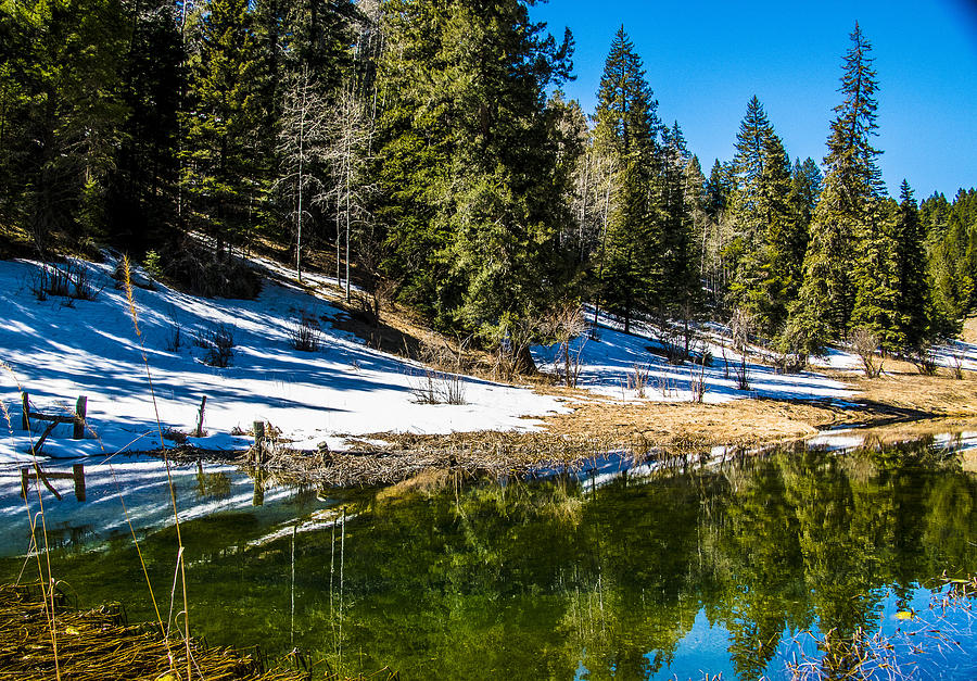 Spring Thaw   Picture This! framing & gallery