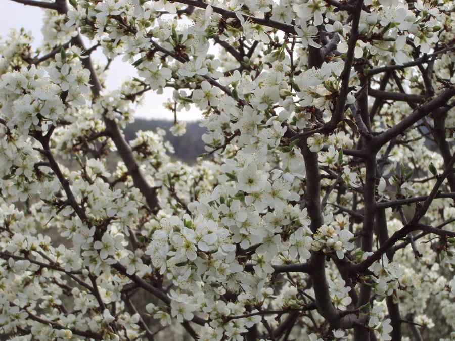 Landscape Photograph - Spring Tree by David Du Hempsey
