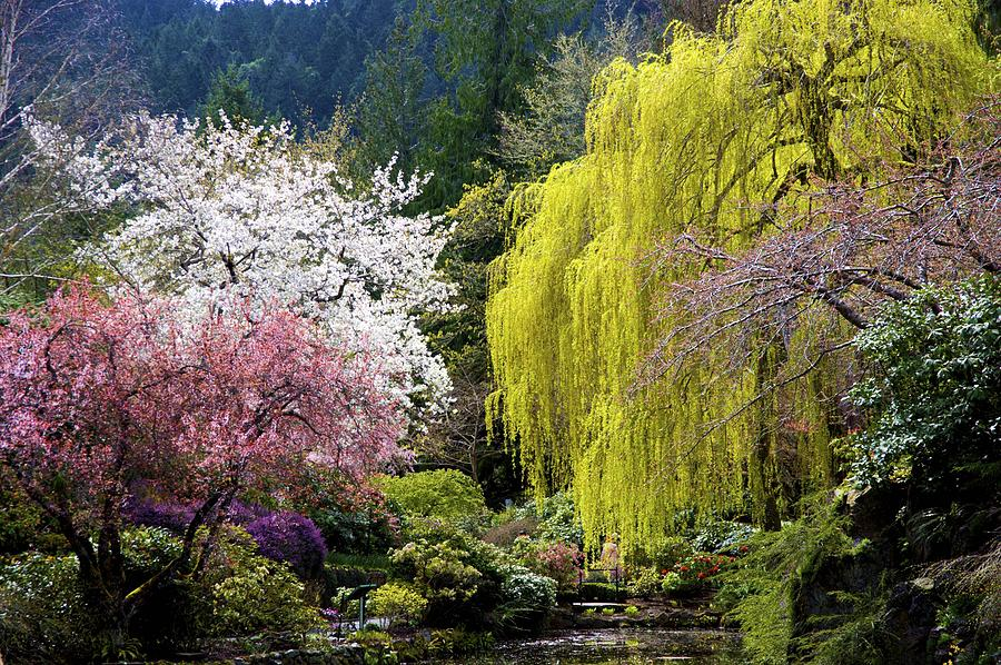 Spring Trees Photograph By Joyce Sherwin