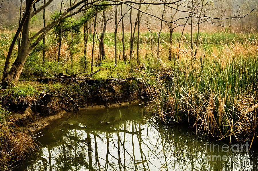 Landscape Photograph - Spring Trees Reflection by Iris Greenwell