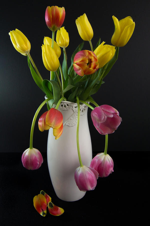 Spring Tulips In White Vase - Black Background Photograph