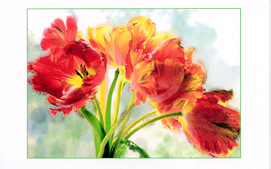 Tulips Photograph - Spring Tulips by Margaret Hood
