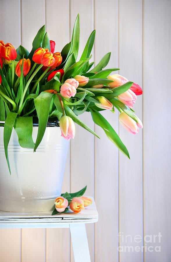 Background Photograph - Spring Tulips On An Old Bench by Sandra Cunningham