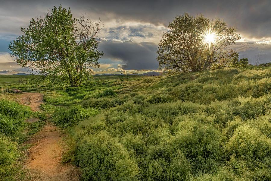 Spring Utopia by Janice Bennett